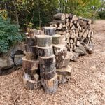 Pin oak left from construction clearing available for sale to benefit EMS