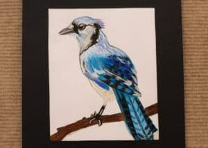 Marissa Clark, 10, Blue Jay, Colored Pencil