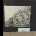 """Rose"" by Anneke McDonald '22 at OASIS Gallery, Feb. 2021"
