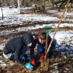 American Chestnut Tree seedling planting. Photo by Loren Hostetter